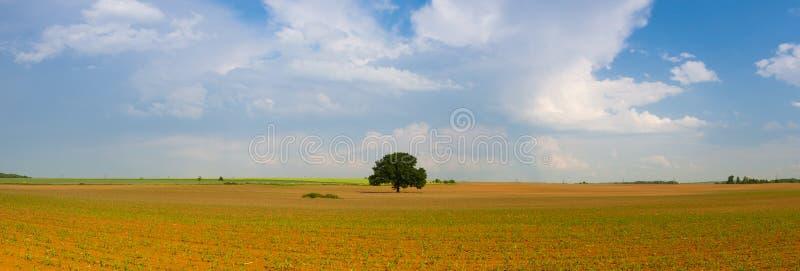 Denkwürdiger Baum auf dem leeren Maisfeld lizenzfreie stockbilder