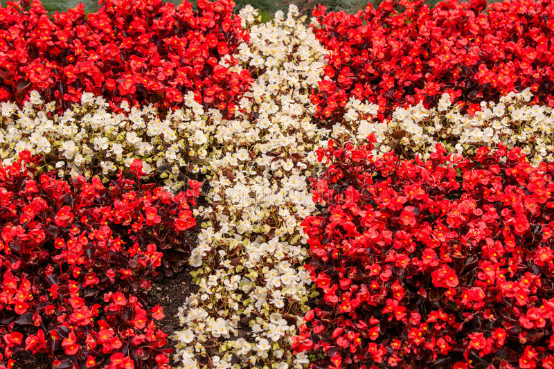 Denmark flag made out of flowers stock image image of icon object download denmark flag made out of flowers stock image image of icon object mightylinksfo