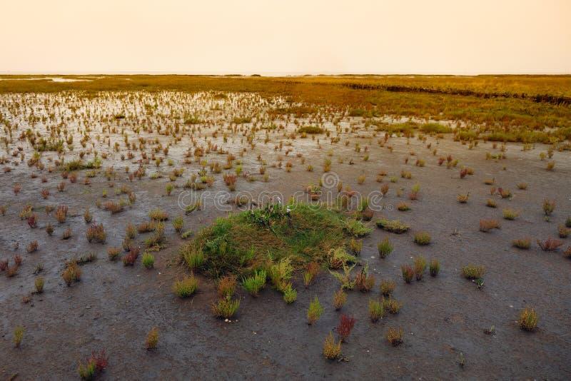 denmark hav wadden arkivbild