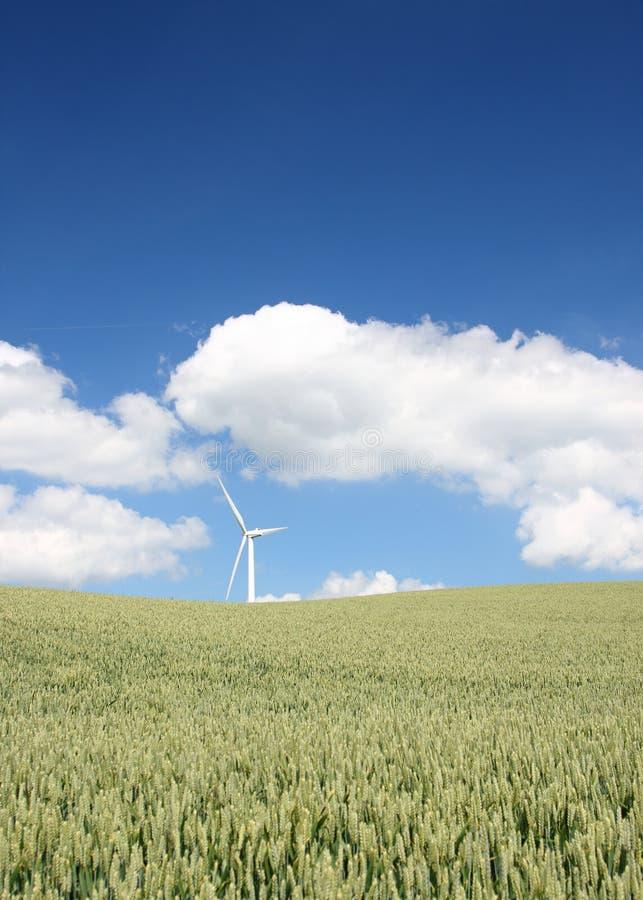 denmark wiatraczek obrazy stock