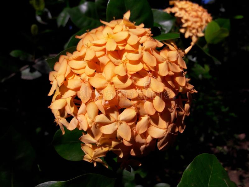 Denna är den härliga blomman arkivbilder