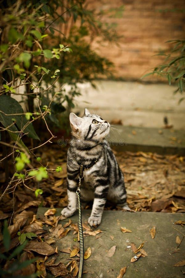 Denna är en bild av min katt, Levi arkivfoton