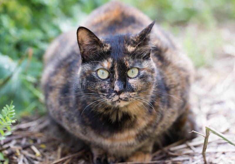 Tillfällig katt som var i sätta in i fjädra arkivfoton