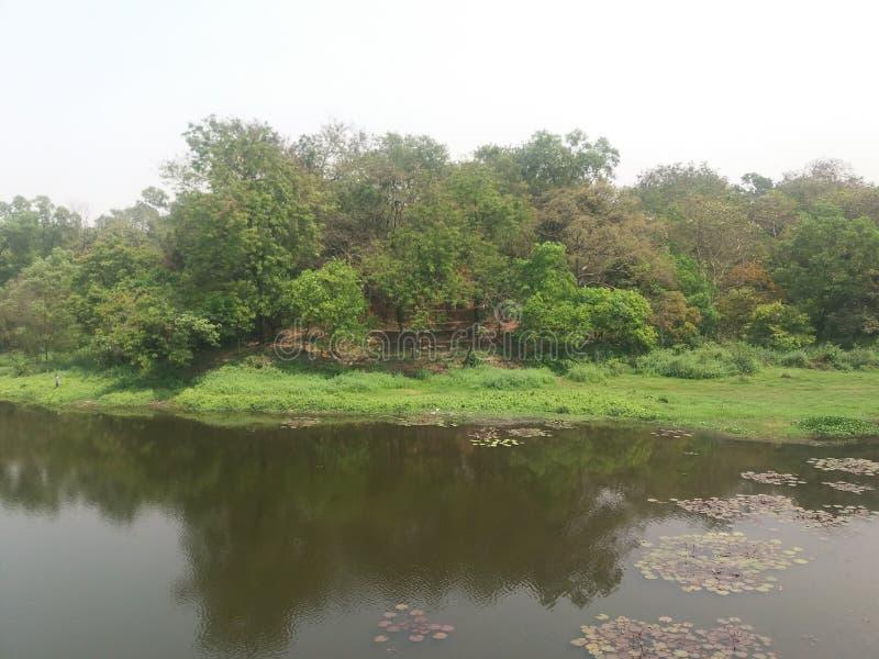 Denna är en sjö i botanisk trädgårdiin dhaka, Bangladesh arkivbilder