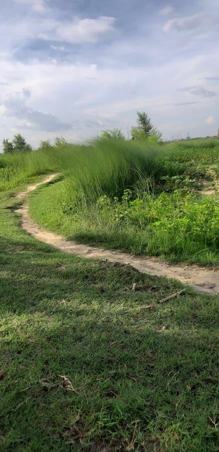 Denna är ett fält för linjalområdesgräs & en liten bana arkivbilder