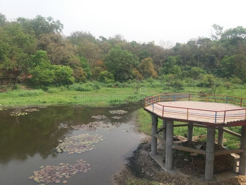 Denna bild är botanisk trädgårdsjön i dhaka, Bangladesh arkivbild