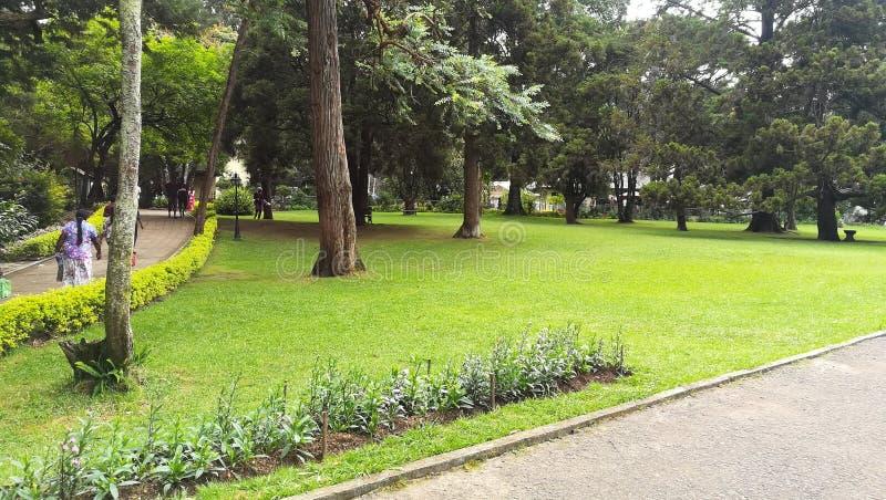 Denna bild är den Sri Lanka blommaträdgården arkivfoton