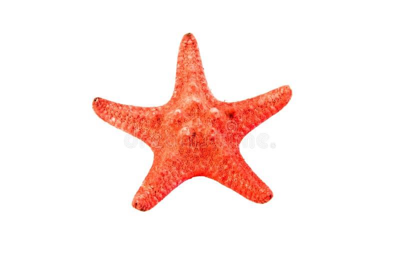 denna gwiazda obrazy stock
