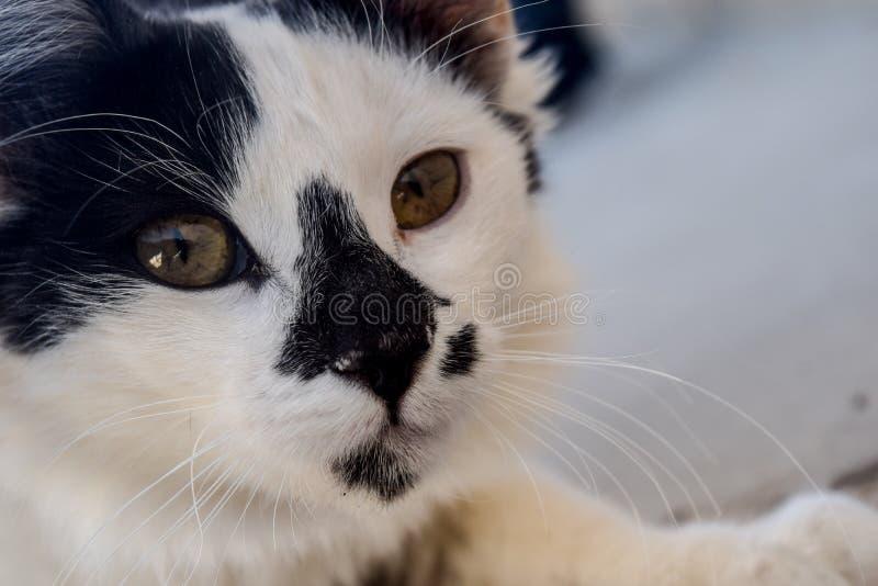 Denna katt är ett av de bästa husdjuren som du har någonsin sett royaltyfri foto