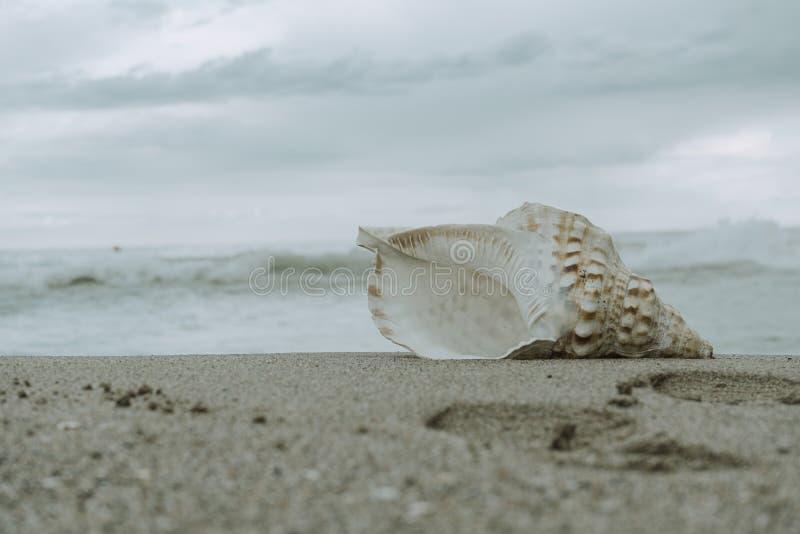 Denna koncha na brzeg plaża zdjęcia royalty free