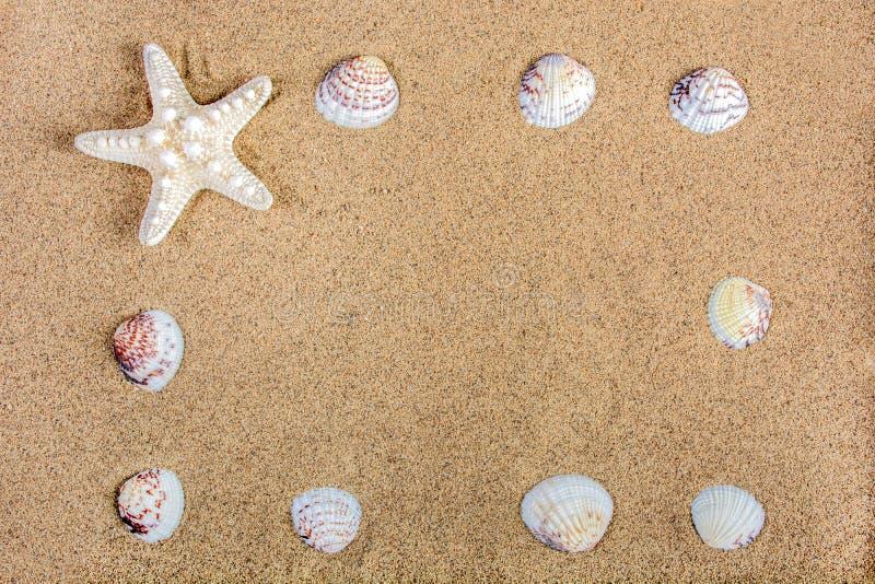 Denna natury rama z rozgwiazdą i skorupami na plażowym piasku obraz royalty free