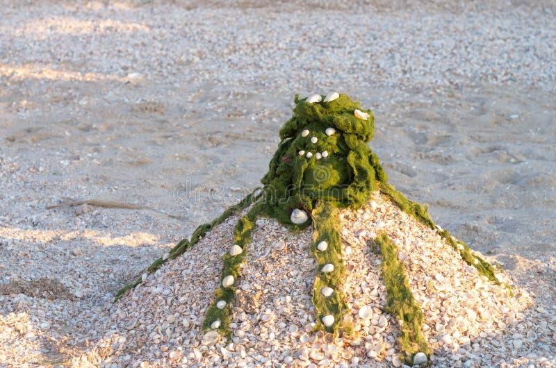 Denna ośmiornicy postać piasek, skorupy i zielone algi, zdjęcie royalty free