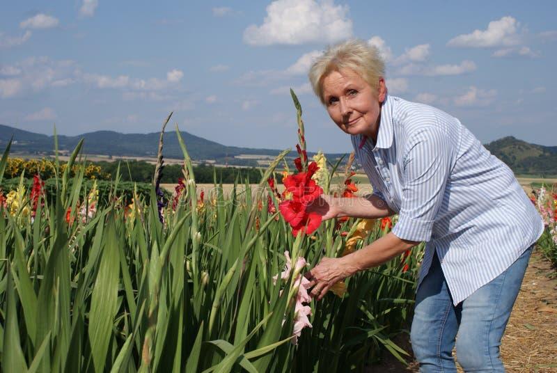 Denna röda gladiolus önskar att sätta den unga kvinnan i vasen hemma arkivfoto