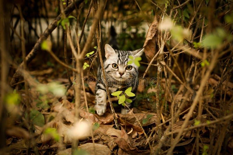 Denna ?r en bild av min katt, Levi royaltyfria foton