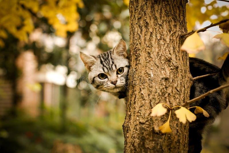 Denna ?r en bild av min katt, Levi arkivbilder