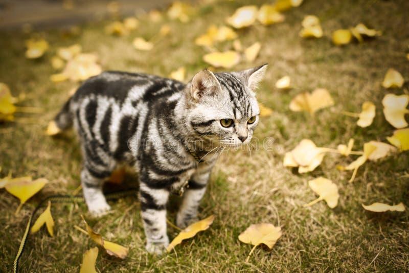 Denna ?r en bild av min katt, Levi royaltyfria bilder