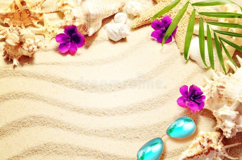 Denna skorupa i kwiaty na piasku, lata pojęcie obrazy stock