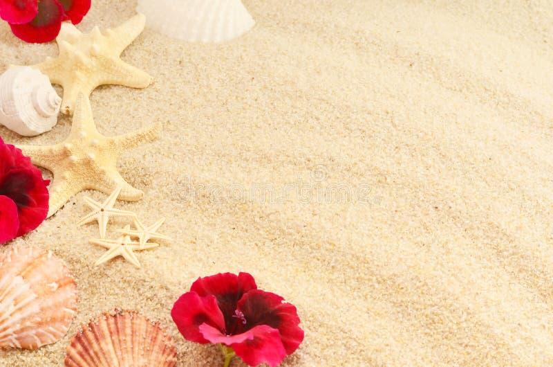 Denna skorupa i kwiaty na piasku, odgórny widok, lata pojęcie obrazy royalty free