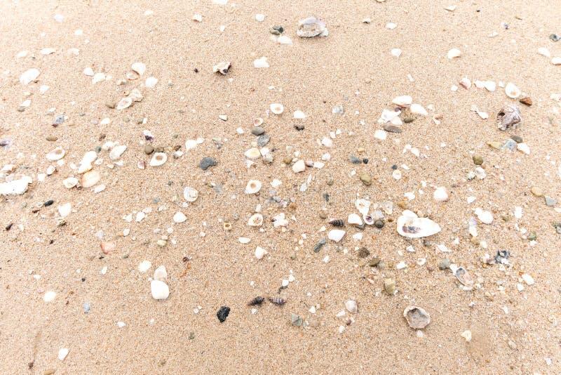 Denna skorupa na plaży fotografia stock