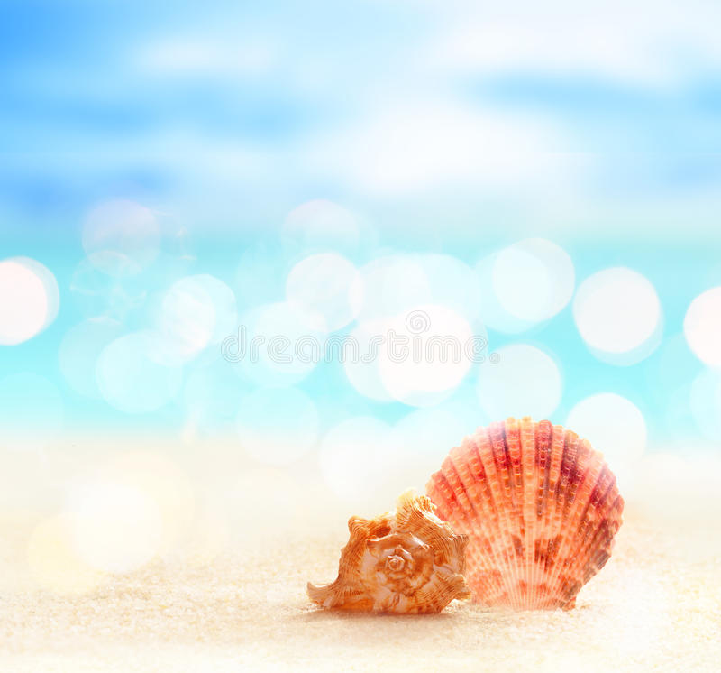Denna skorupa na plaży fotografia royalty free