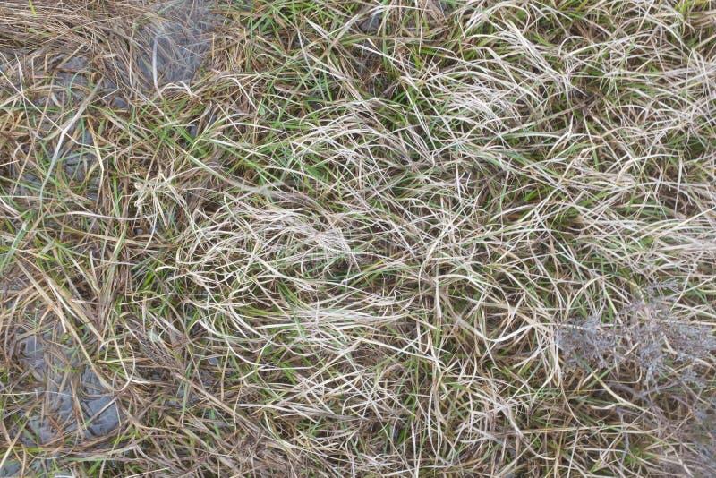 Denna trawa, zieleni wodna roślinność zdjęcia stock