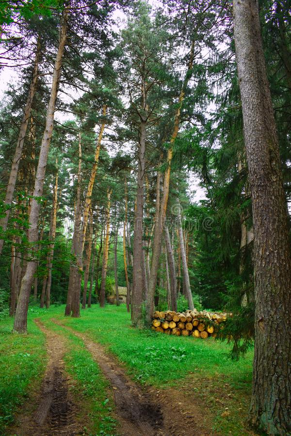 Denndropark Stepanavan in Armenia province of Lori. Dendropark in Lori Armenia a park full of landscapes, alleys, giant trees, flowers, lots of green space stock image