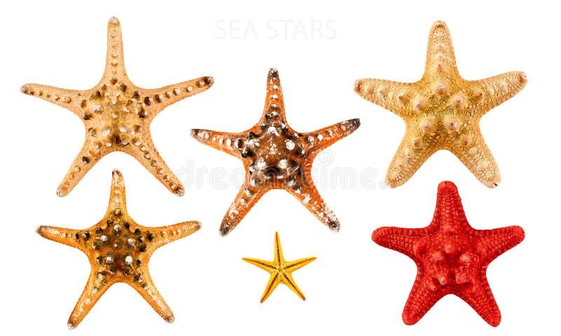 denne gwiazdy zdjęcia royalty free