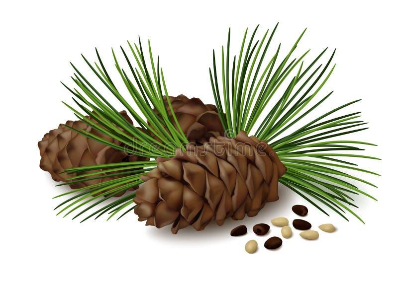 Denneappels met noten en pijnboomnaalden op witte achtergrond stock illustratie