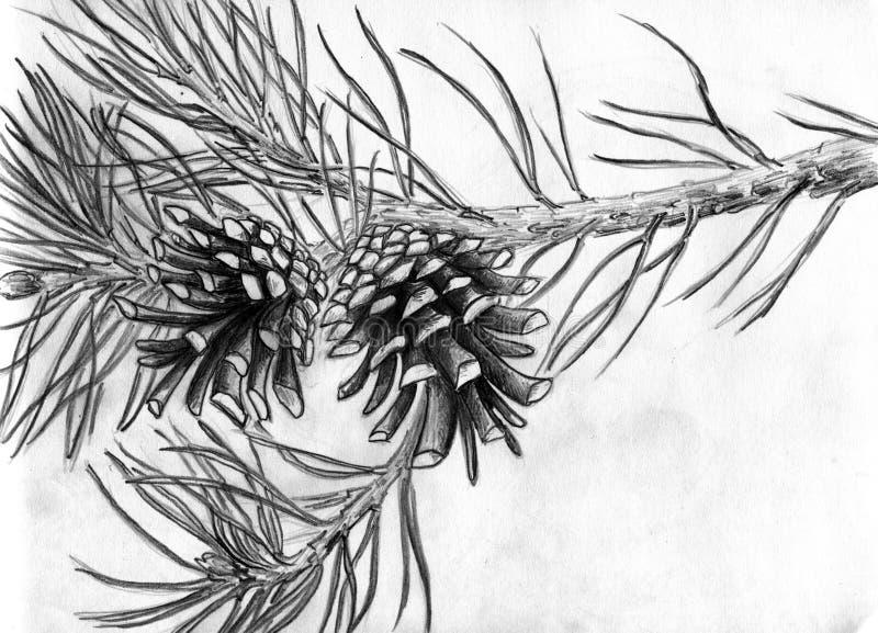 Denneappels op boomtak stock illustratie