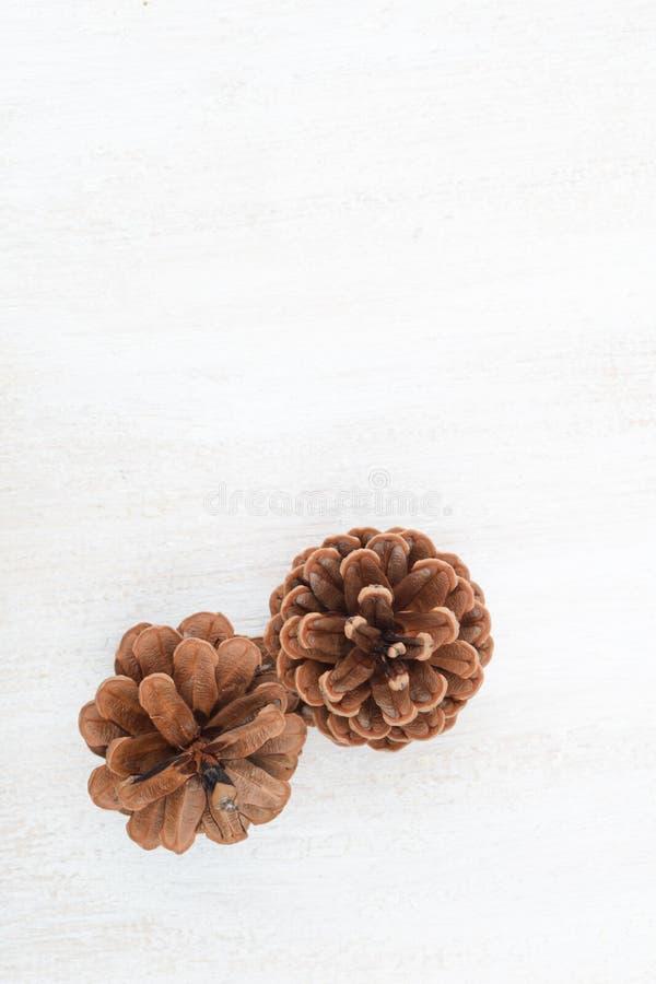 Denneappels op een witte achtergrond royalty-vrije stock foto