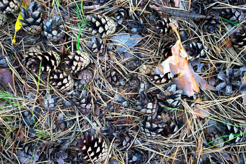Denneappels op het gras in de herfst royalty-vrije stock afbeeldingen