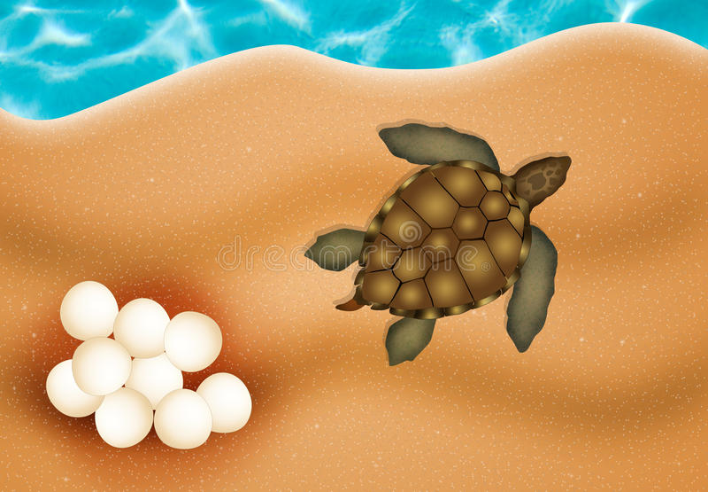 Dennego żółwia jajka ilustracja wektor