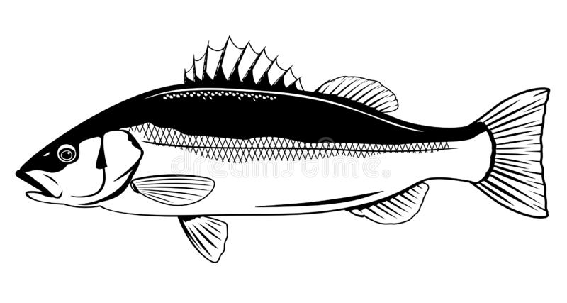 Dennego basu ryba ilustracji