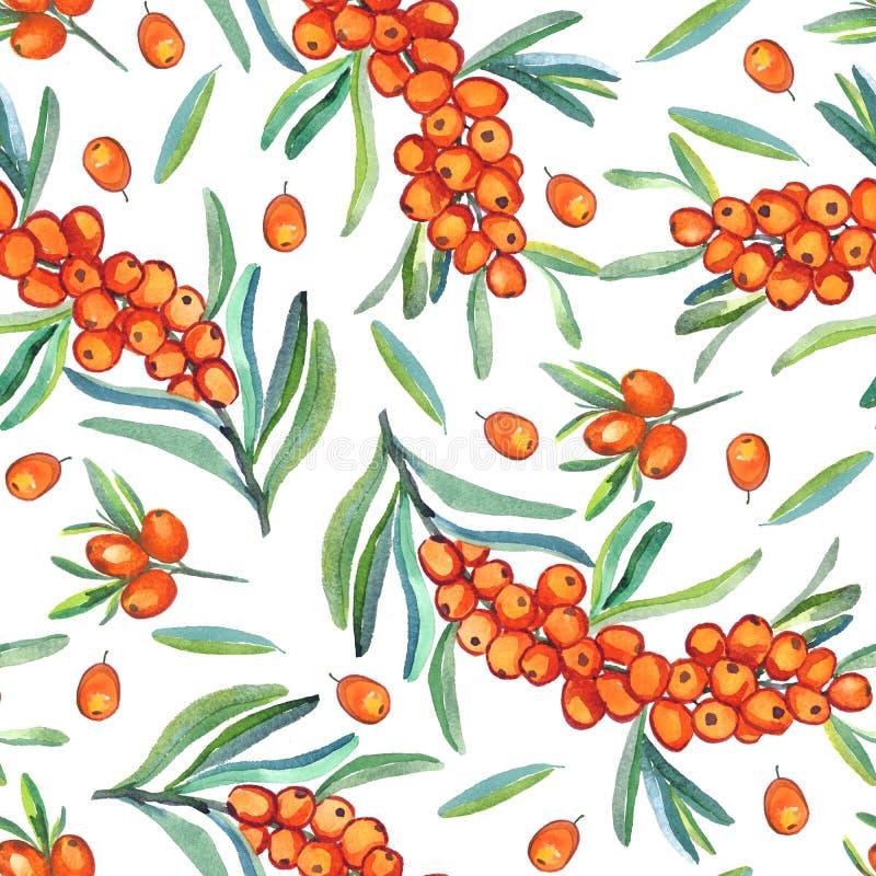 Dennego buckthorn gałąź z dojrzałymi jagodami, jagodami i liśćmi na białym tle, ilustracja wektor
