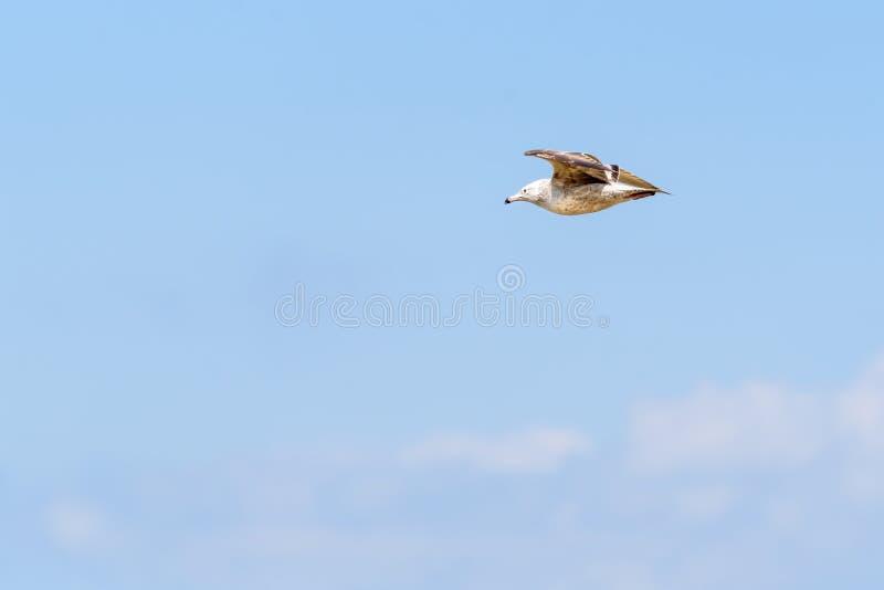 Dennego frajera latający jezioro michigan w Gary Indiana obrazy royalty free
