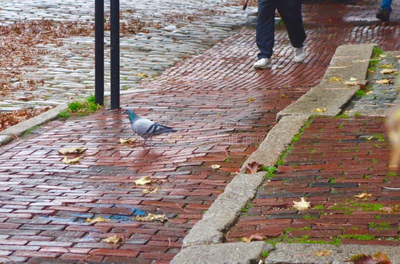 Dennego frajera pozycja na starym ceglanym chodniczku w Portland, Maine, usa fotografia royalty free