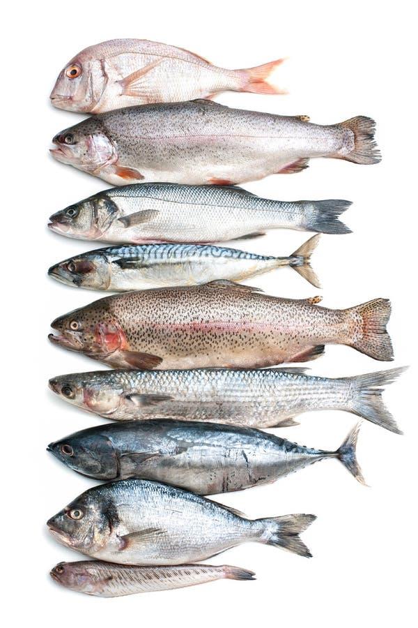 Dennej ryba kolekcja obrazy royalty free