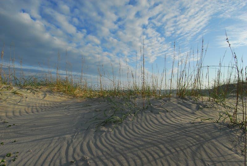 denni Carolina plażowi owsy nabrzeżni wydmowi północni zdjęcie royalty free