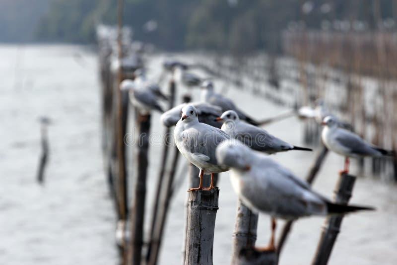 Denni ptaki zdjęcia royalty free