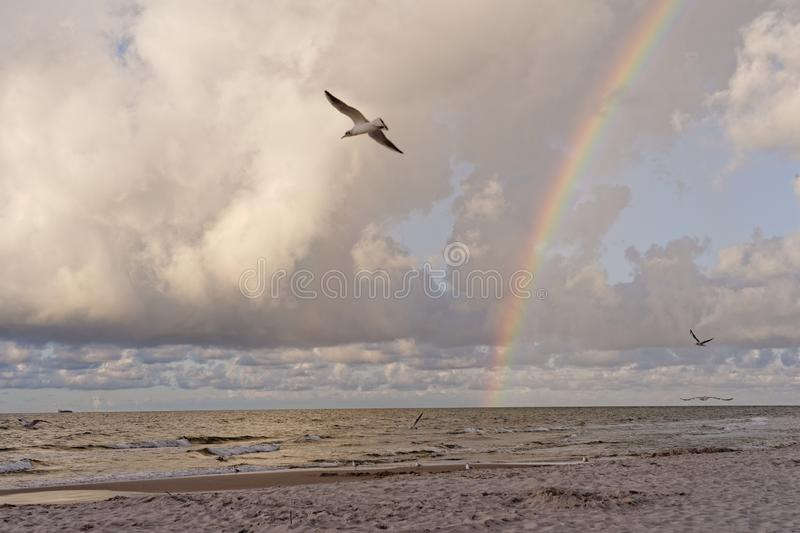 Denny †‹â€ ‹krajobraz, tęcza chmurnieje, ptaki obraz stock