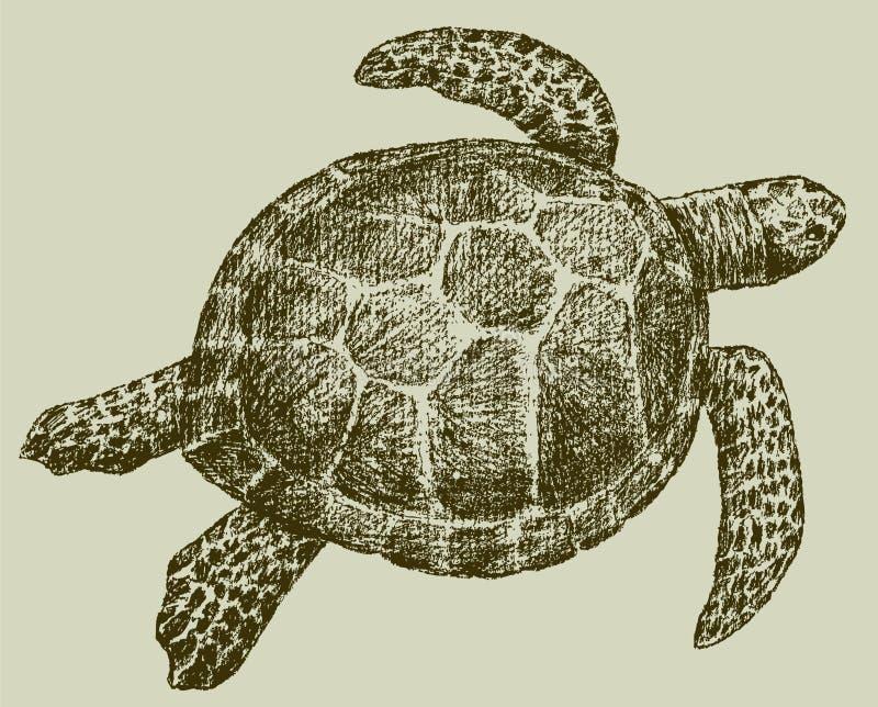 denny żółw royalty ilustracja