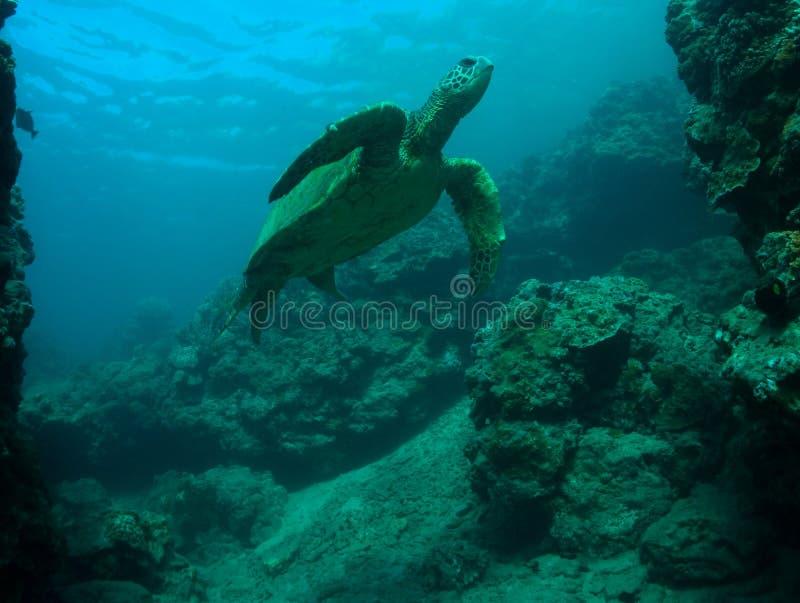 Download Denny żółw obraz stock. Obraz złożonej z życie, natura - 28959091
