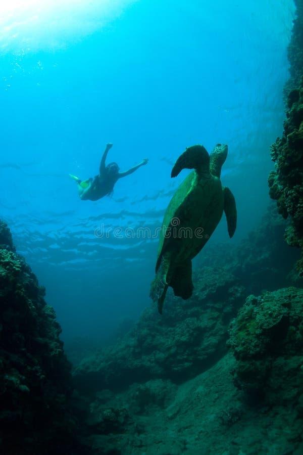 Download Denny żółw obraz stock. Obraz złożonej z gracefulness - 28959105