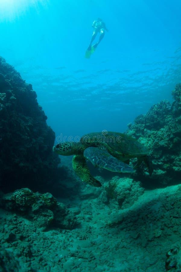 Download Denny żółw i snorkeler obraz stock. Obraz złożonej z życie - 28959081