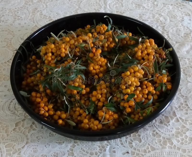 Denny buckthorn jest słodkiej pomarańcze jagodą fotografia stock