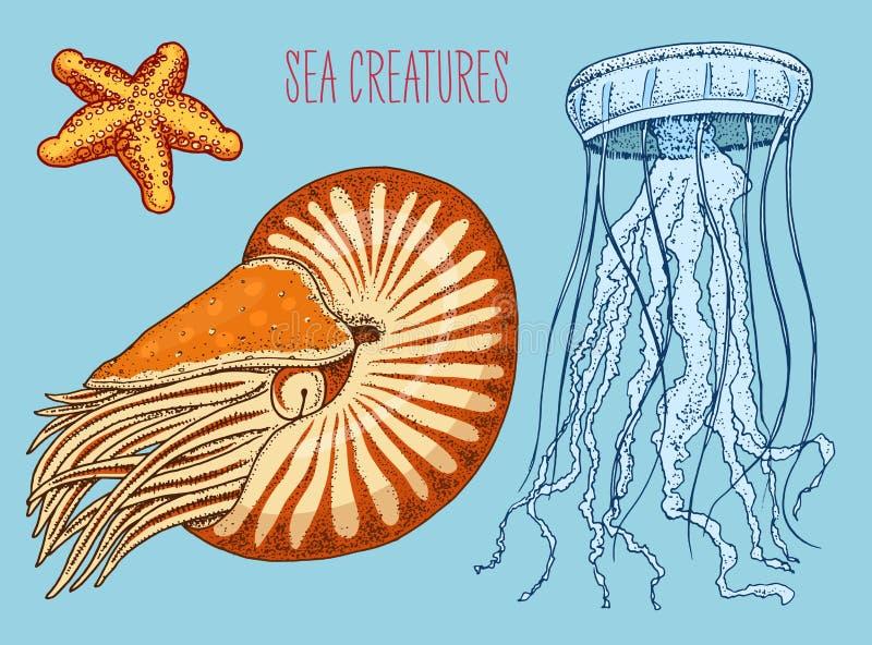 Denny istota łodzika pompilius, jellyfish i rozgwiazda, shellfish, mollusk lub milczek grawerująca ręka rysująca w starym nakreśl royalty ilustracja