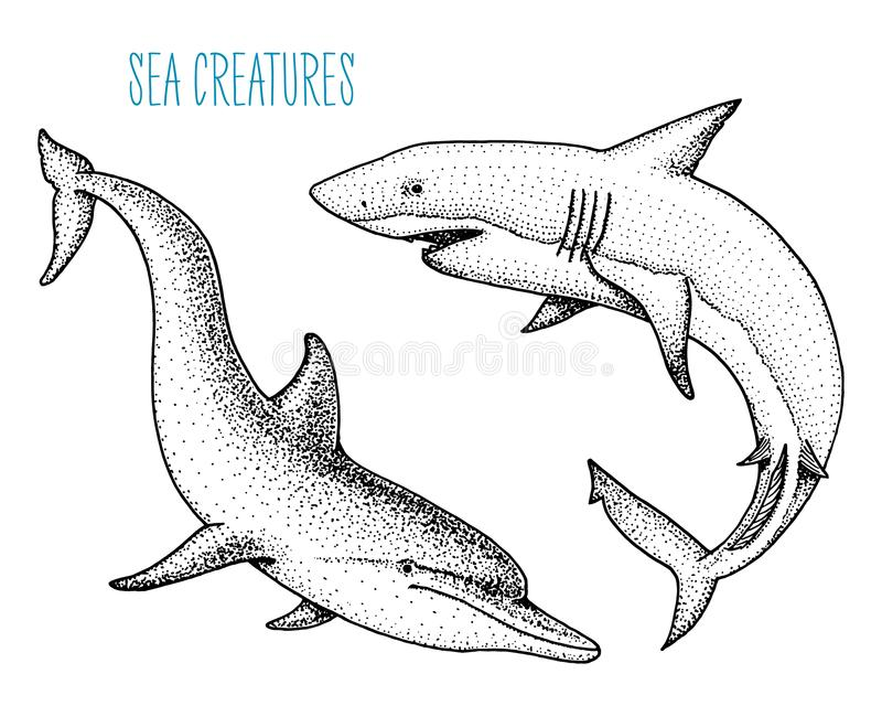 Denny istota delfin, biały rekin i grawerująca ręka rysująca w starym nakreśleniu, rocznika styl nautyczny, morski lub potworze,  ilustracja wektor