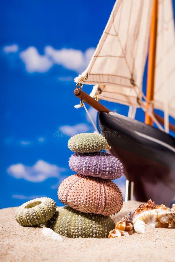 Denny jeż łuska na piaska i niebieskiego nieba tle obraz stock