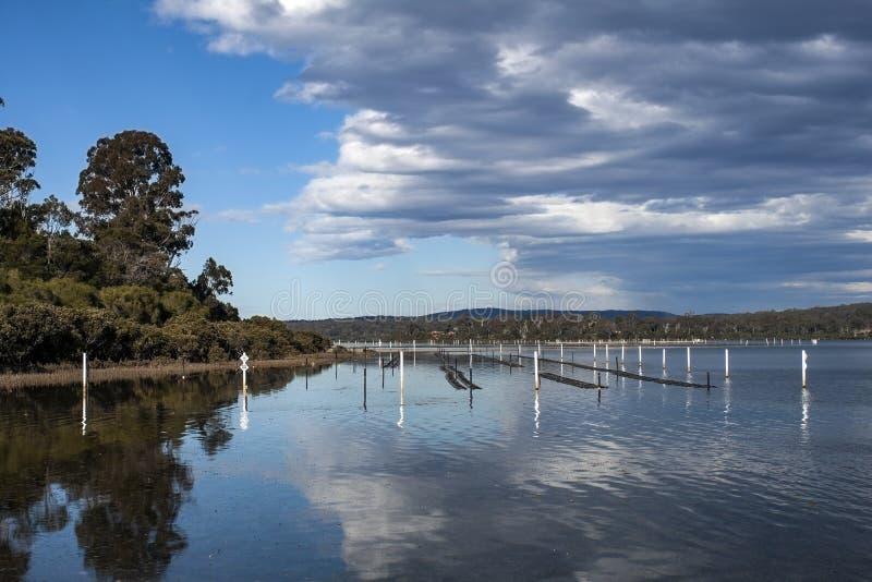 Denny jeziorny nsw Australia zdjęcia royalty free