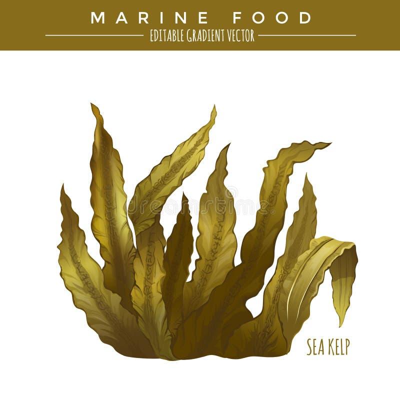 Denny Kelp Morski jedzenie royalty ilustracja